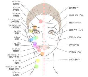 顔面神経麻痺 顔の筋肉
